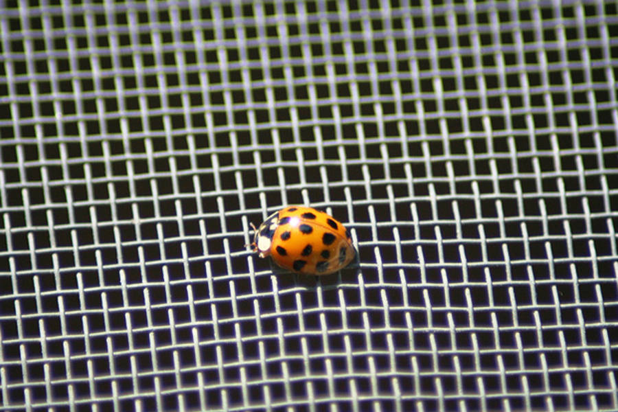 insect screen mesh